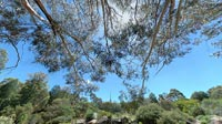 wwp1204: Sanctuary : Australian National Botanic Gardens